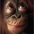 """Osapp: almeno 16mila detenuti in """"contenimento chimico"""". Nel cervello delle scimmie la fonte dell'ansia. Mamma in difficoltà cede la figlia ai Servizi Sociali. Ospedali: il dolore dei bambini non è considerato. Silenzio in aula: c'è lezione di risata. Omofobia? in realtà è """"autofobia""""."""