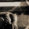 Una mia cara amica ha subito una perdita grave, ha perso il suo figlio in un incidente stradale. L'amica mi raccontava di quello che le succedeva nel processo di lutto, mi raccontava della perdita, della tristezza e della depressione, dei suoi pensieri […]