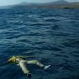 Gli ultimi minuti a bordo del barcone affondato a Lampedusa, prima dell'alba del 3 ottobre, sono stati una affannosa ricerca di aiuto: urla disperate di circa 500 uomini e donne, segnalazioni con le torce elettriche per squarciare il buio della notte, un […]